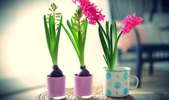 wiosna dekoracje