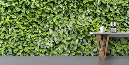 Fototapety roślinne